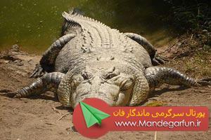 خطرناک ترین حیوانات کشنده دنیا + تصاویر